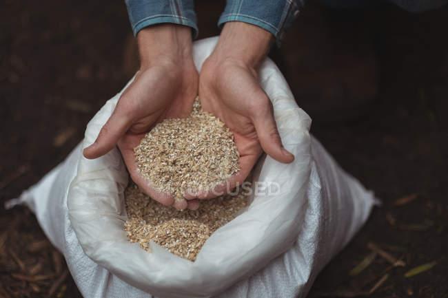 Primer plano de las manos sosteniendo un saco de cebada para preparar cerveza en la cervecería casera - foto de stock