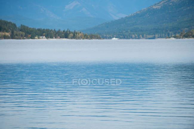 Vue tranquille belle rivière et forêt — Photo de stock