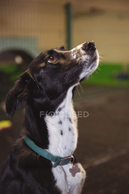 Curioso cão sentado no chão e olhando para o centro de cuidado do cão — Fotografia de Stock