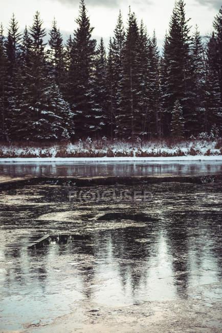 Rio e árvores na temporada de inverno, Banff, Alberta, Canadá — Fotografia de Stock