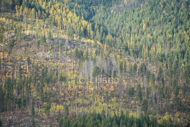 Vue majestueuse des arbres dans une forêt dense — Photo de stock