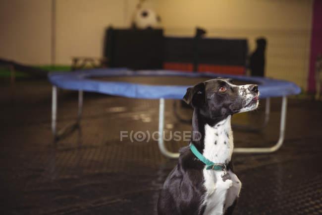 Close-up de um cão curioso olhando para cima — Fotografia de Stock