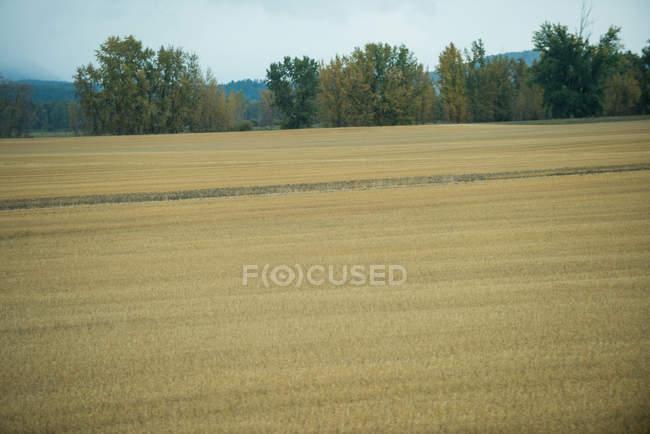 Vista panorâmica de belas pastagens em terras agrícolas — Fotografia de Stock