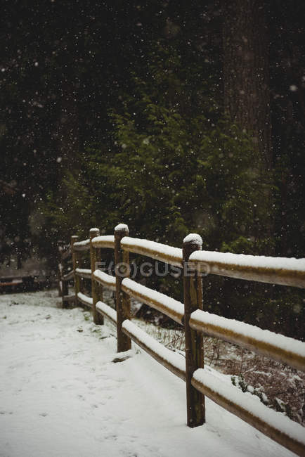 Road, fence and trees covered with snow during winter — Stock Photo