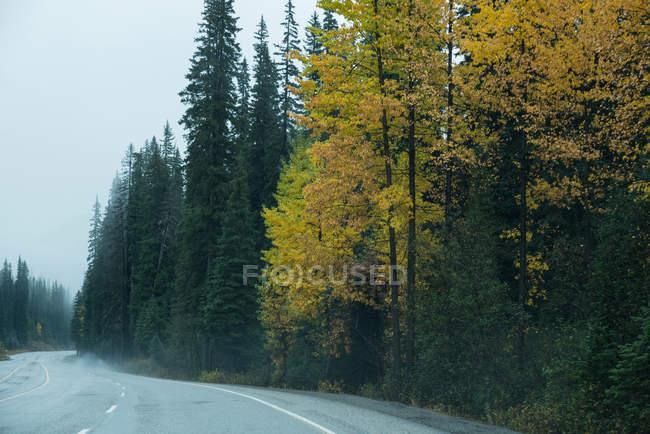 Estrada de asfalto através da floresta verde no outono — Fotografia de Stock