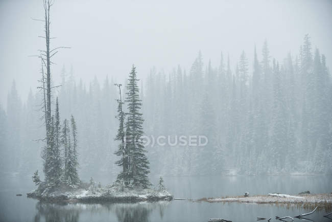 Snow-covered pine trees between the lake during winter — Stock Photo