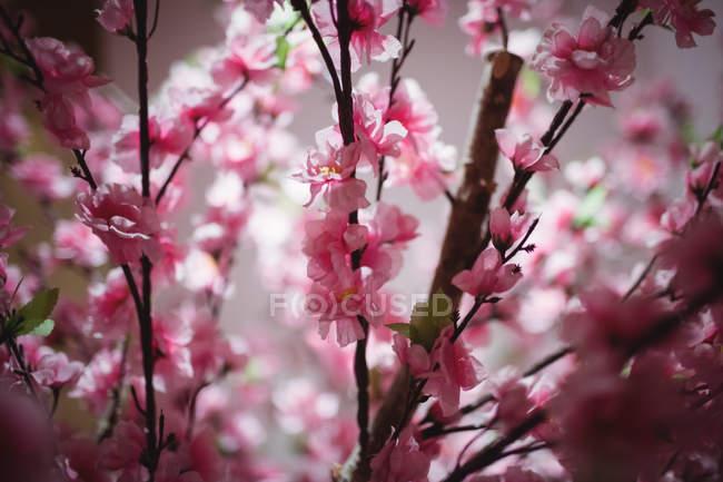 Крупный план филиала с розовыми цветками в помещении — стоковое фото