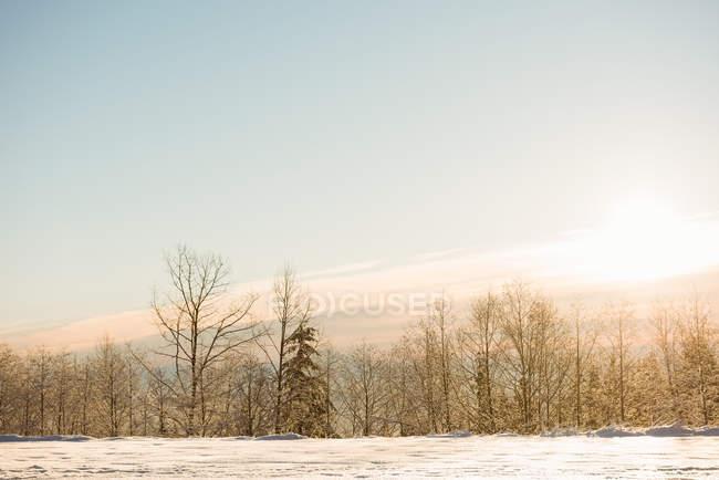 Vista del paesaggio innevato durante l'inverno — Foto stock