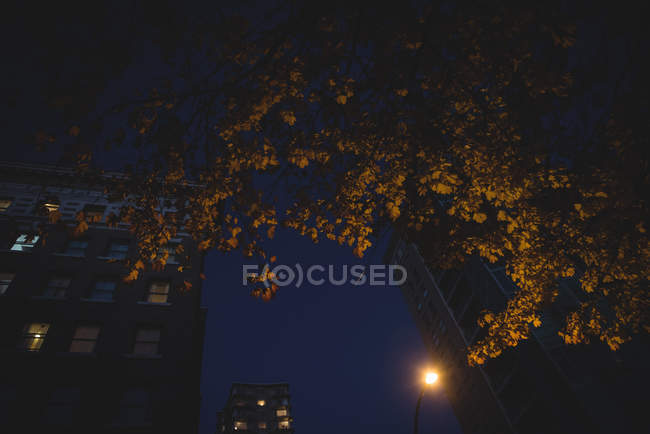 Low angle view of office buildings and autumnal trees at night — Stock Photo