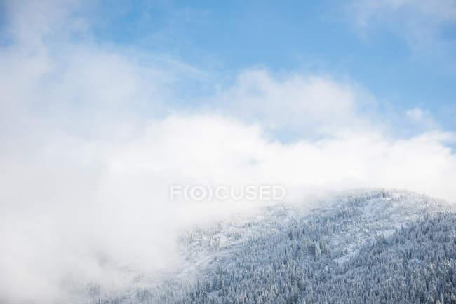Заснеженные деревья и горные леса в Банфе, Альберта, Канада — стоковое фото