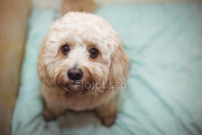 Крупный план игрушечного щенка в центре по уходу за собаками — стоковое фото