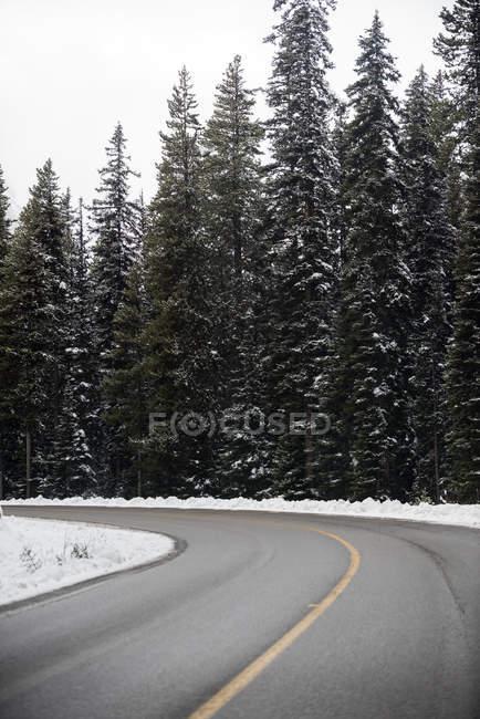 Asphalt road through snowy forest — Stock Photo