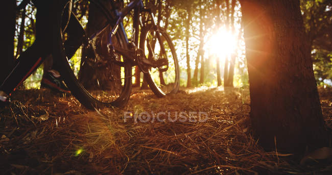 Radfahrerin rast in Wald — Stockfoto