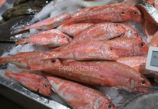 Різні види риб на лічильник риби в супермаркеті — стокове фото