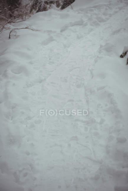 Primer plano del paisaje nevado durante el invierno - foto de stock