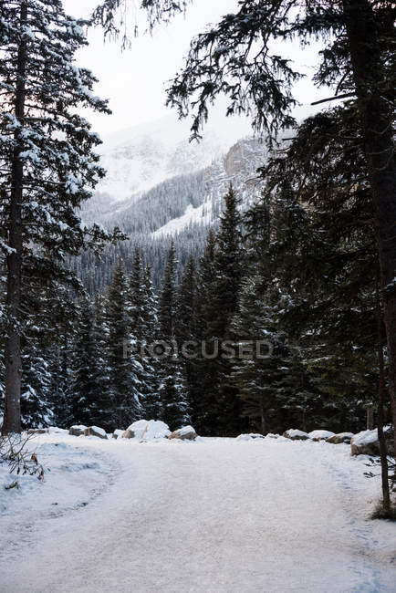 Icy road between rows of snowy trees in winter — Stock Photo