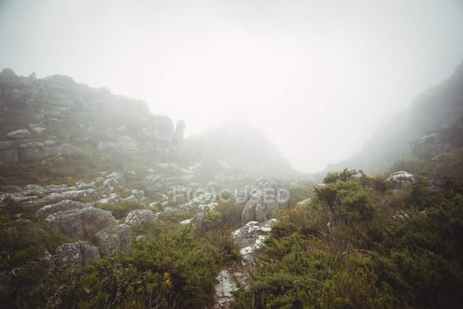 Vista maestosa della valle con il verde della vegetazione e rocce — Foto stock
