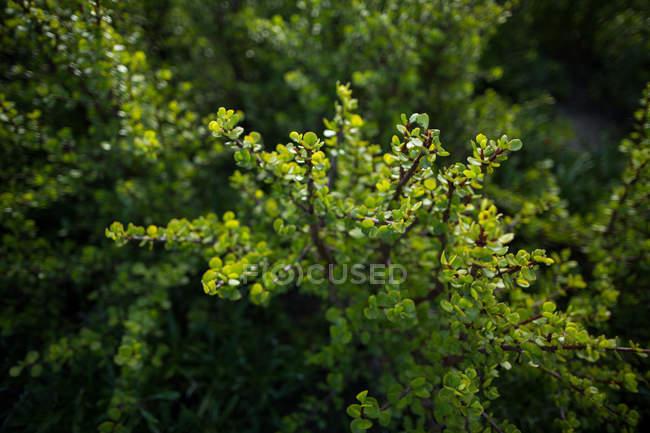 Крупный план Текстура зеленых растений — стоковое фото