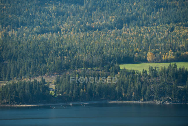 Tranquil view of beautiful green forest and river — Stock Photo
