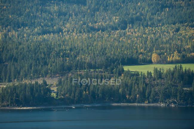 Vista tranquila linda floresta verde e Rio — Fotografia de Stock