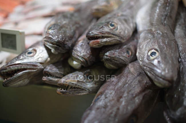 Anchovies kept at fish counter in the supermarket — Stock Photo