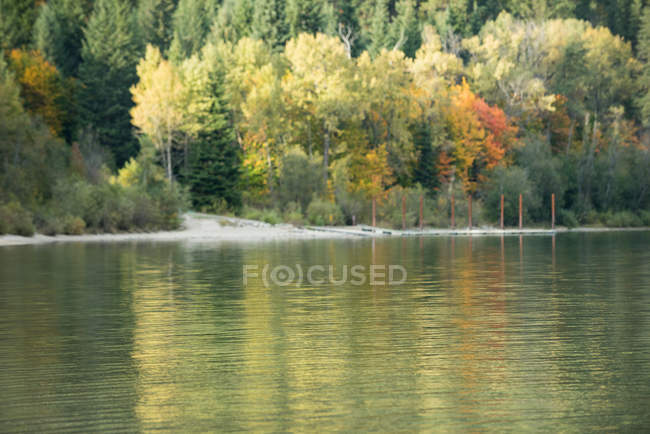 Beautiful autumn forest and river in the fall season — Stock Photo