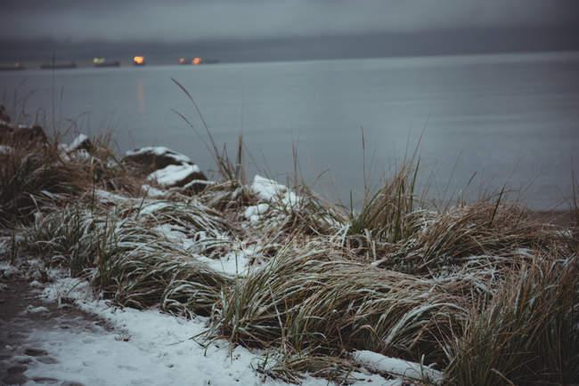 Marram траві, покритою сніг і море у фоновому режимі під час зими — стокове фото