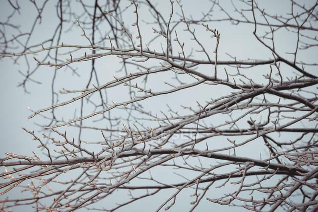 Cerrar vista de árbol ramas azul cielo - foto de stock