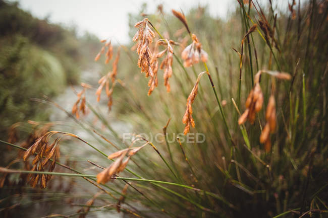 Close-up de plantas murchas no bosque ao ar livre — Fotografia de Stock