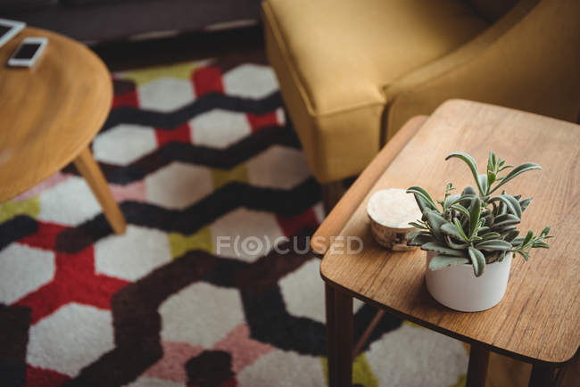 Pianta succulenta della casa sulla tavola di legno nel soggiorno a casa — Foto stock