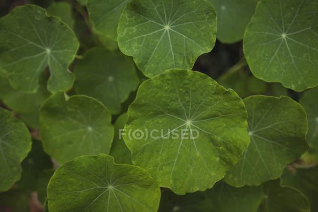 Gros plan des feuilles vertes sur les plantes — Photo de stock