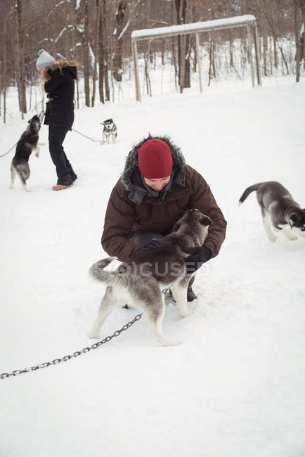 Mushers petting young Siberian dogs during winter - foto de stock
