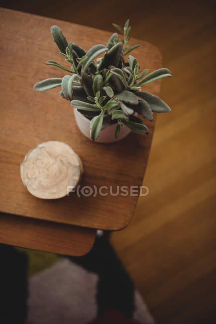 Pianta della casa e sottobicchieri tenute sulla tavola di legno nel soggiorno a casa — Foto stock