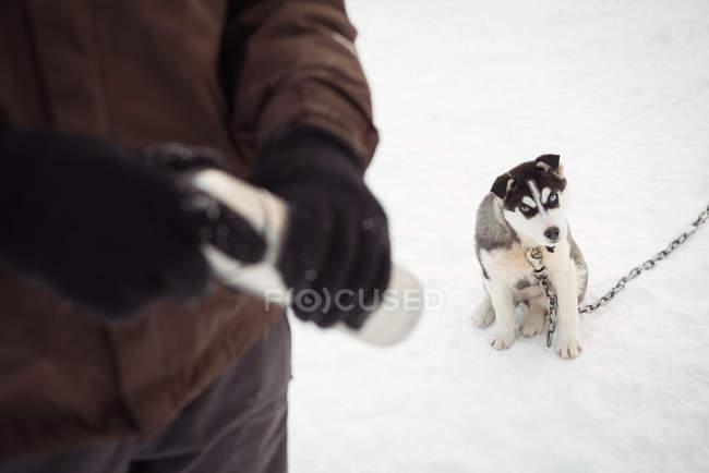 Musher holding thermos mentre giovane cane siberiano che si siede sulla neve — Foto stock