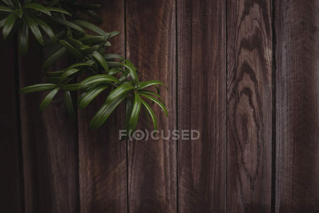 Close-up of wood panelling with plant twig — Stock Photo