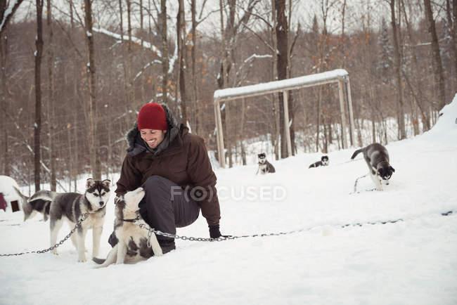 Мужчина ласкает молодых сибирских собак зимой — стоковое фото