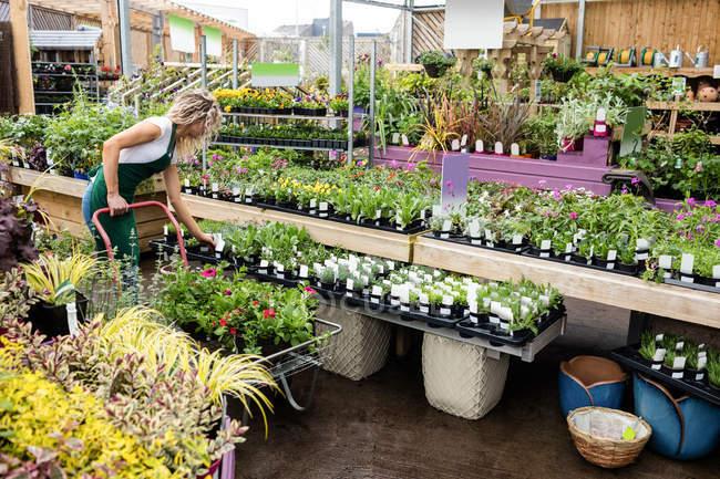 Female florist arranging flower pots in garden centre — Stock Photo