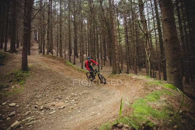 Cyclist on dirt road by tree in forest — Stock Photo