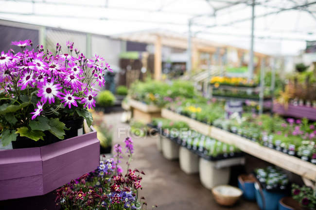 View of flowers and potted plants in garden centre — Stock Photo
