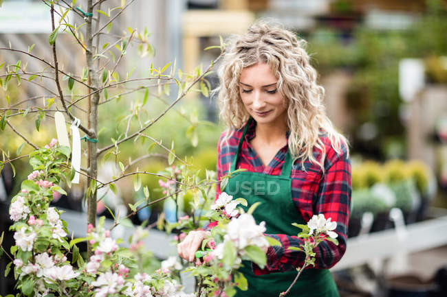 Female florist pruning stem of flower with pruning shears in garden centre — Stock Photo