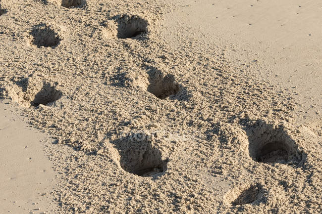 Paw prints in the sand at the beach — Stock Photo