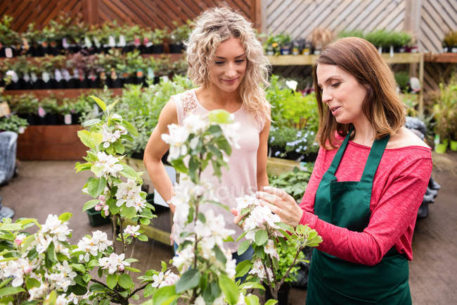 Флорист говорити з жінкою, яка покупку рослин у Садовий центр — стокове фото
