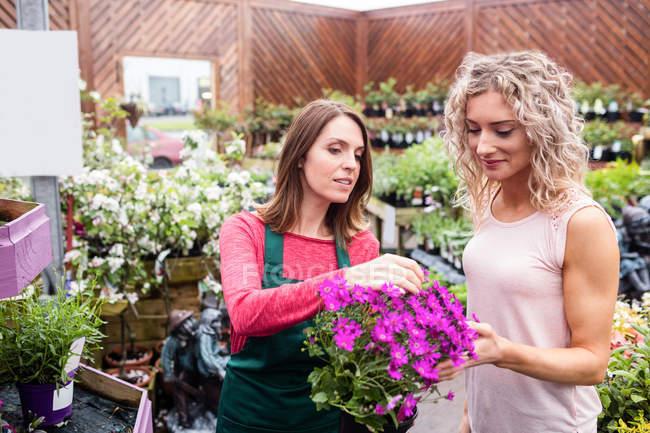 Флорист дает советы женщине, которая покупает цветы в саду — стоковое фото