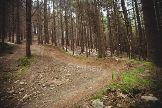 Empty dirt road amidst trees in woodland — Stock Photo