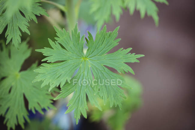 Крупним планом зеленого листя в садовому центрі — стокове фото
