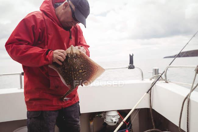 Quitar el gancho de pescados del rayo en barco pescador - foto de stock