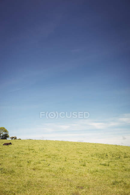 Scenic view of beautiful rural landscape in daytime — Stock Photo