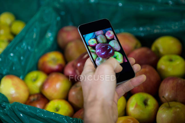 Cropped image of man taking photo of apples in display in organic section at supermarket — Stock Photo