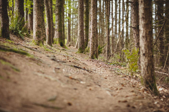 Empty road amidst trees in woodland — Stock Photo