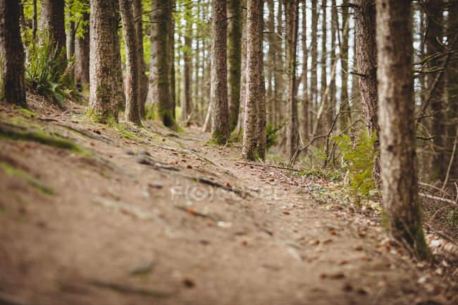 Пустой дороге среди деревьев в лесу — стоковое фото
